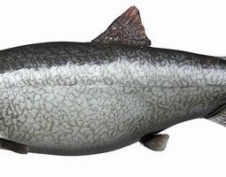 3d stl format trout free download