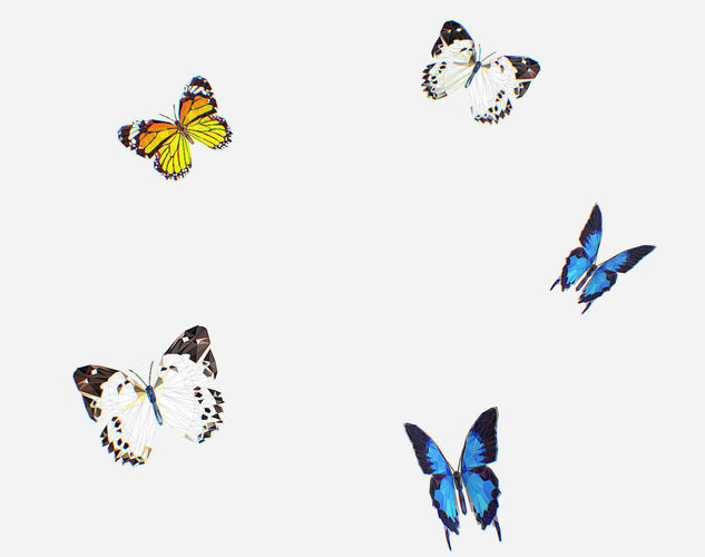 animated low poly art several butterflie insect 3d model animated max fbx ma mb 1