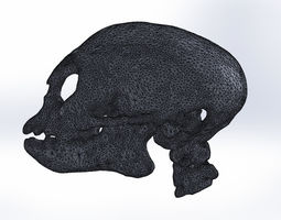 3D printable model monkey skull ct-scan