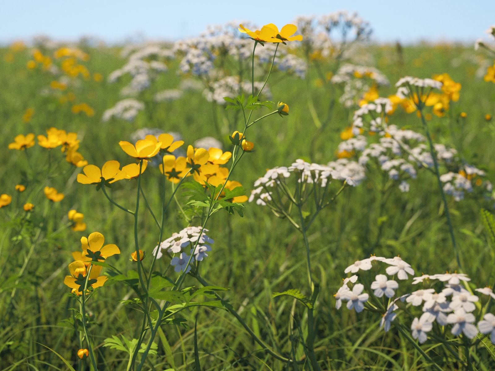 Wildflower Meadow 34-Piece Bundle