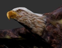 eagle animated VR / AR ready 3d asset