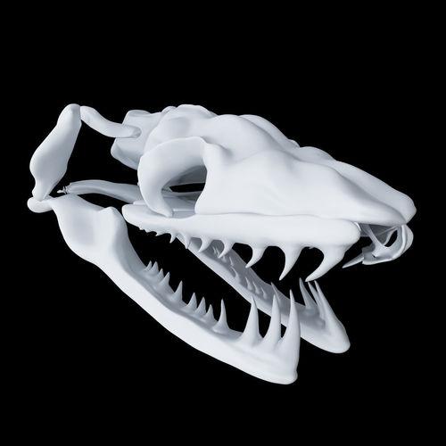 skull snake - aglyphous 3d model obj mtl 1