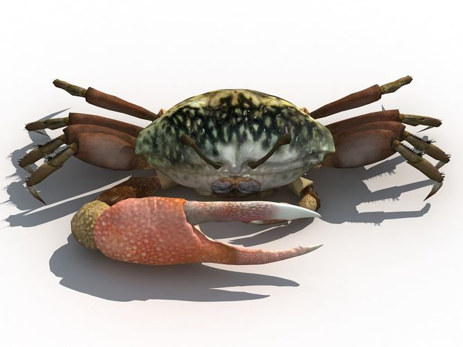 lake fiddler crab 3d model low-poly max obj mtl fbx ma mb tga 1