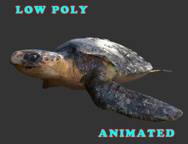 low poly sea turtle 3d model - animated 3d model low-poly max obj mtl 3ds fbx 1