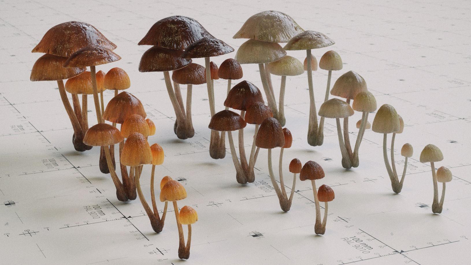 Mushroom Psilocybe 3 Types plus Emissive Textures - PBR AssetKit