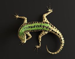 3D model Green Lizard- Podarcis Sicula