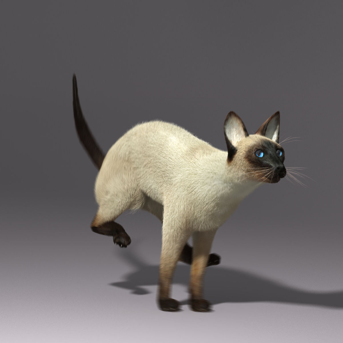 siamese cat 3d model - photo #13
