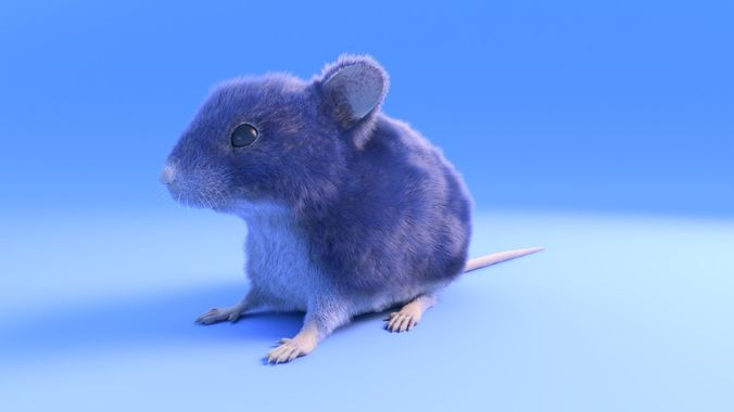 mouse - grey brown white fur - rigged - xgen - realistic style 3d model low-poly rigged obj mtl fbx ma mb 1