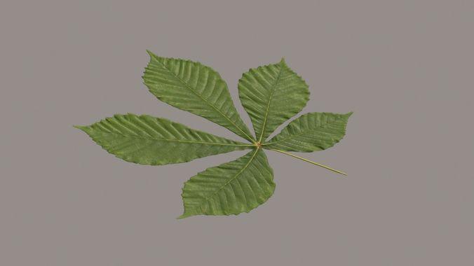 leaf chestnut 3d model max obj mtl 3ds fbx 1