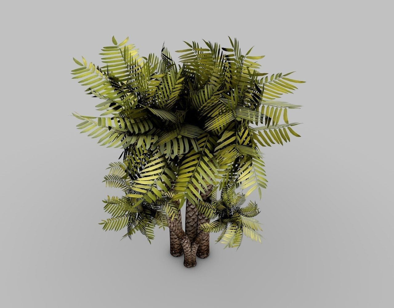 Palm-Tree 3D Model OBJ 3DS FBX C4D DXF