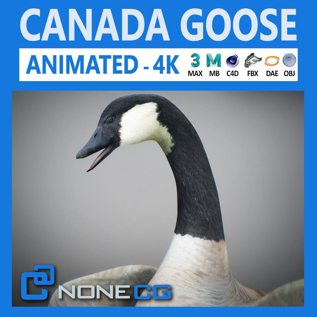 Animated Canada Goose