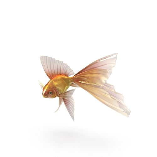 Fantasy Gold Fish rig