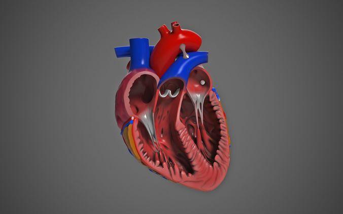 human heart  3d model obj mtl tga 1