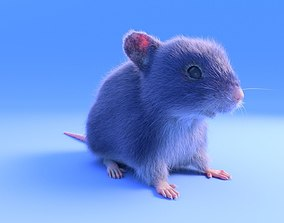 Mouse - grey brown white fur - rigged - realistic 3D asset