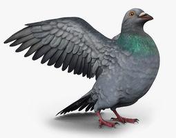 3D asset Pigeon Game Ready