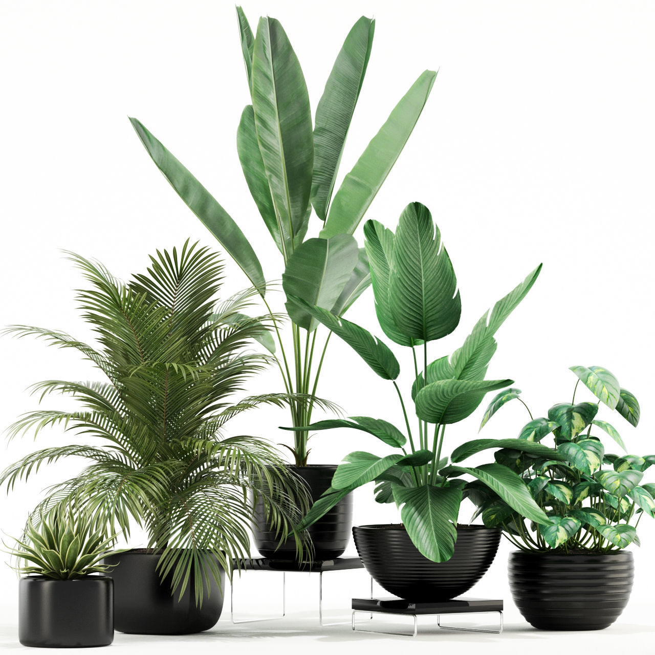 Plants collection 119