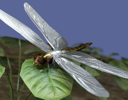 Dragon fly low poly rigged and animated 3D model