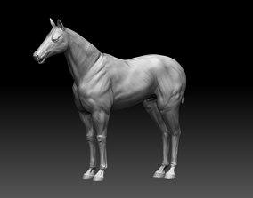 Horse Realistic Zbrush 3D model base mesh