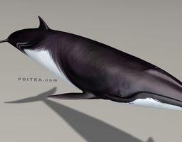 Minke Whale - Balaenoptera Acutoro - Adult Male - 3D 2