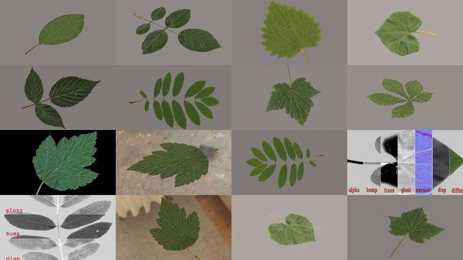 leaves of plants 3d model max obj mtl 3ds fbx 1