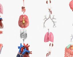 3D model Human internal organs and organ systems