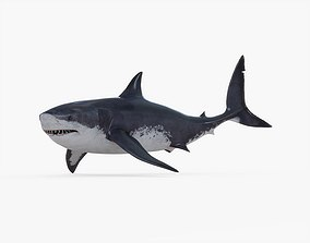 Megalodon Rigged 3D model