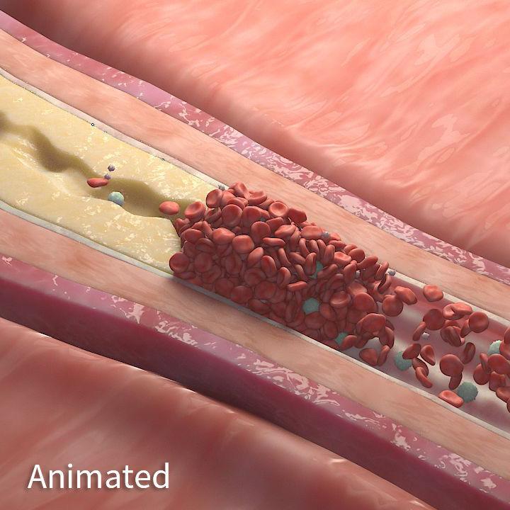 BloodStream Animation