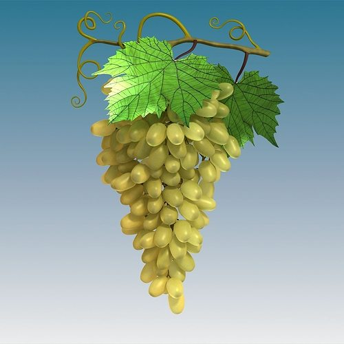 Grapes Cluster Green