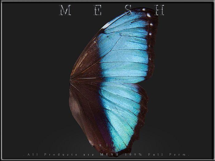 Butterfly wings 02