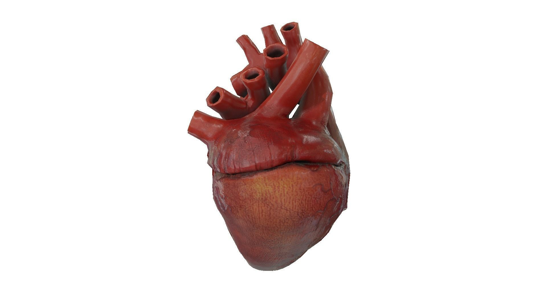 Rigged and Animated Low Poly Human Heart