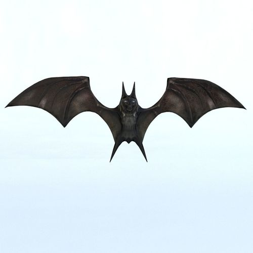 bat mammal bird 3d model max obj mtl 1