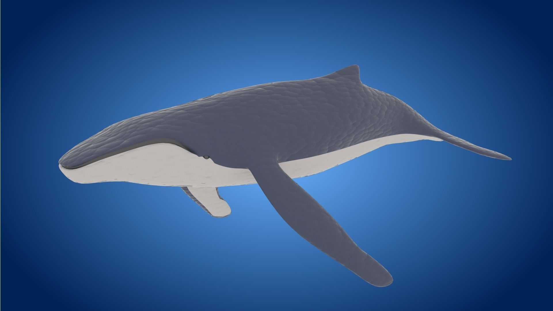 Rigged low poly Whale