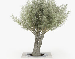 3D model Olea europaea 3 greenery