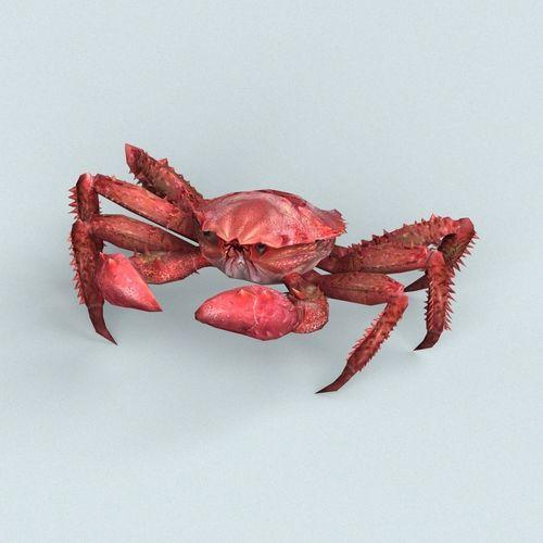 christmas island red crab 3d model low-poly max obj mtl fbx c4d ma mb 1