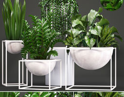 capitulata 3D Collection Exotic plants
