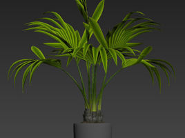 PALM PLANT MODELING