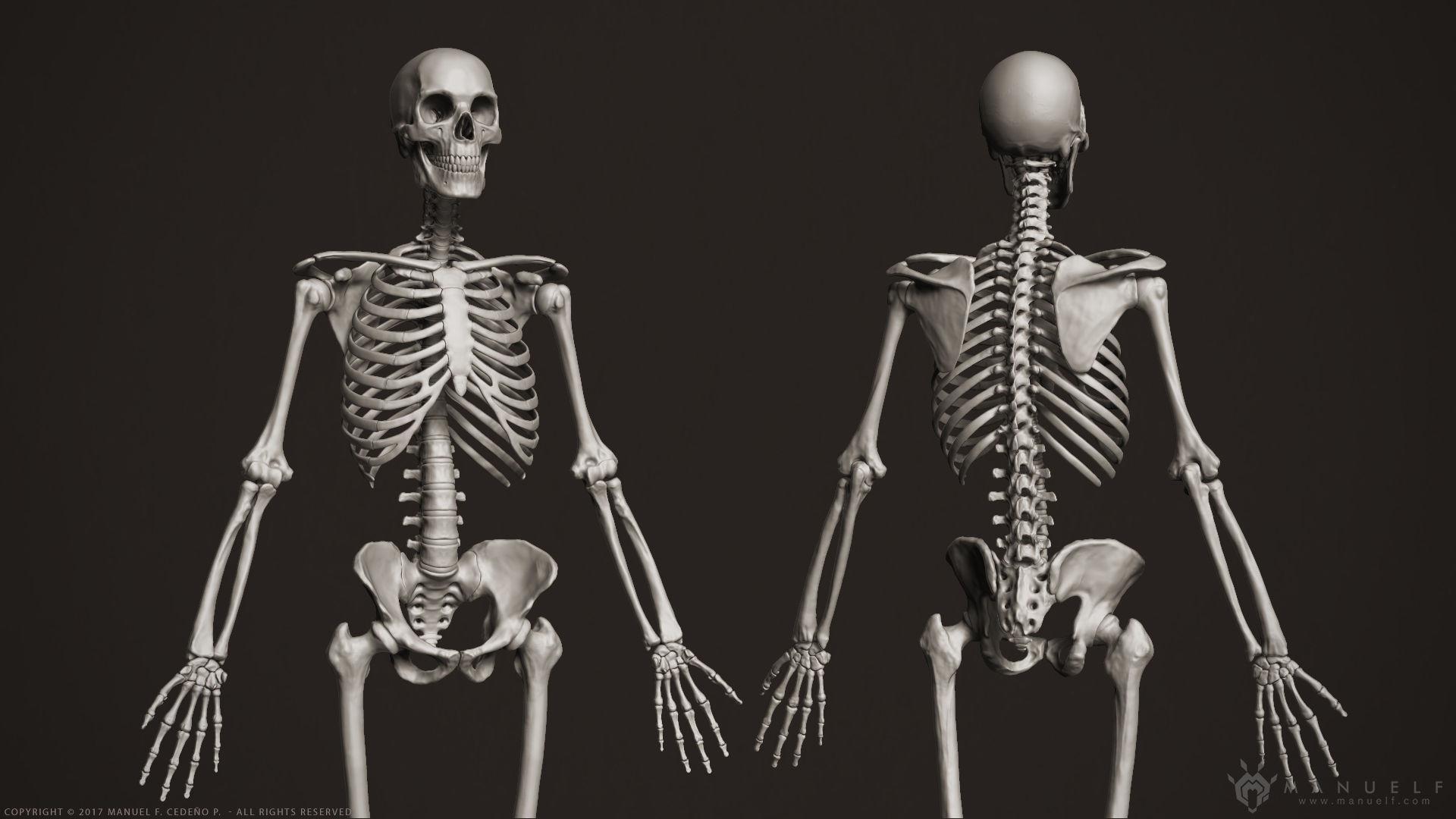 3d Human Skeleton Cgtrader